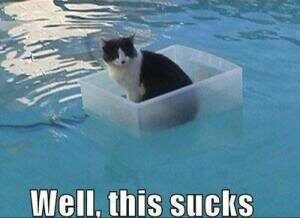 cat floating in a box in the water